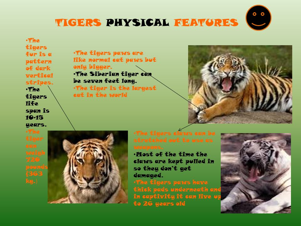 TIGERS PHYSICAL FEATURES
