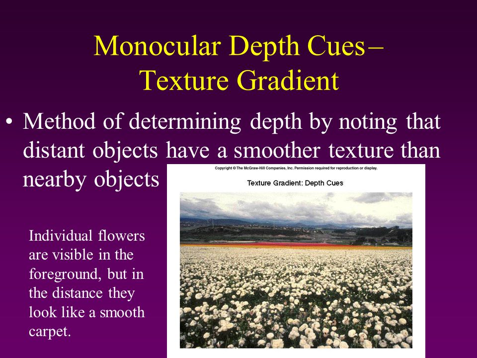 Monocular Depth Cues – Texture Gradient