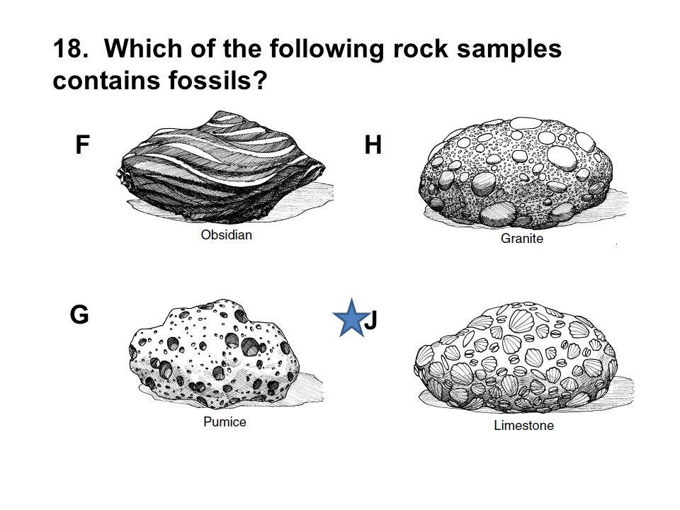 18. Which of the following rock samples contains fossils