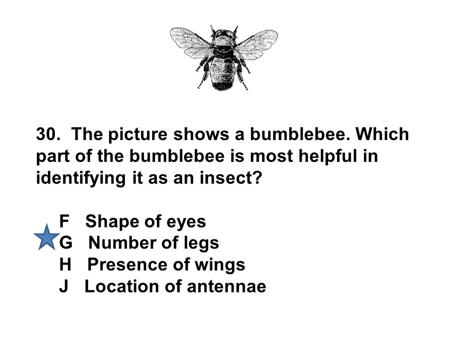30. The picture shows a bumblebee. Which