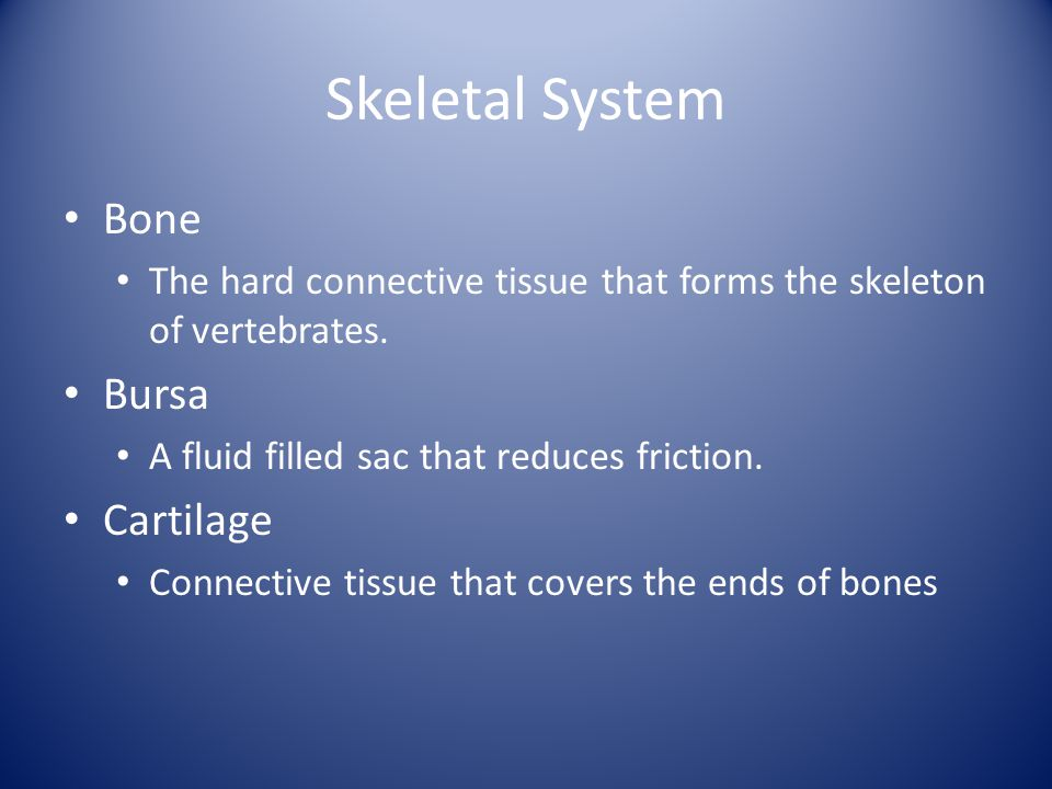 Skeletal System Bone Bursa Cartilage