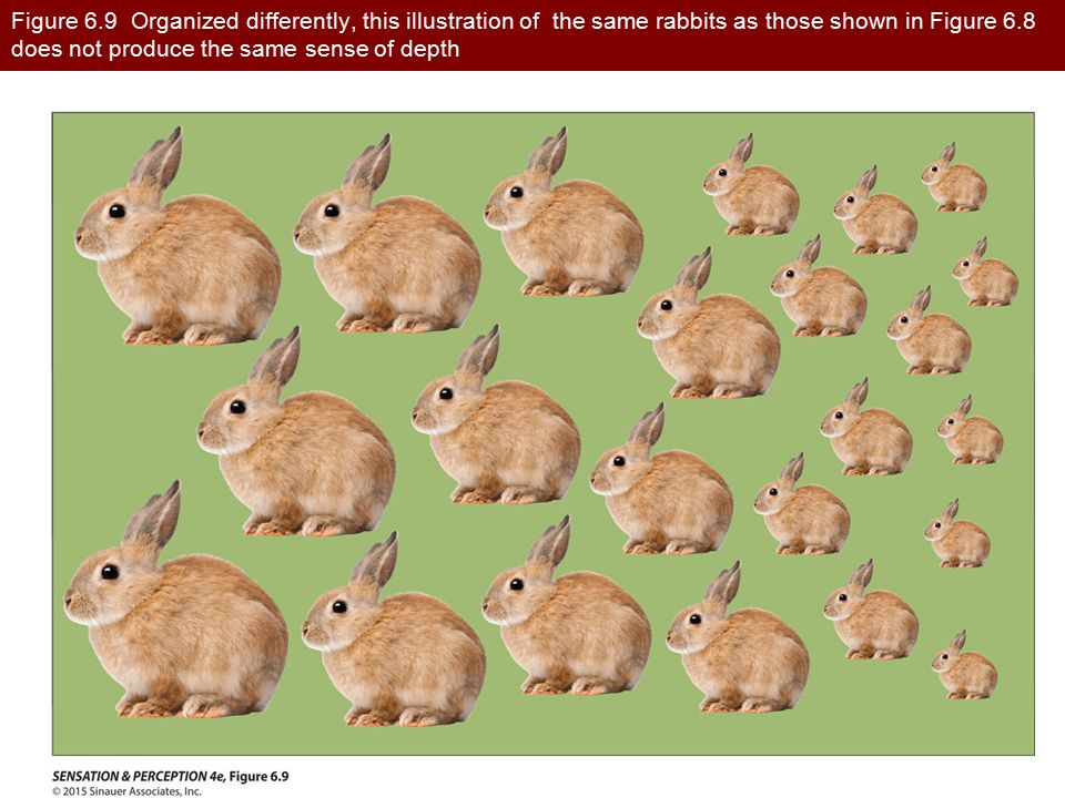 Figure 6.9 Organized differently, this illustration of the same rabbits as those shown in Figure 6.8 does not produce the same sense of depth