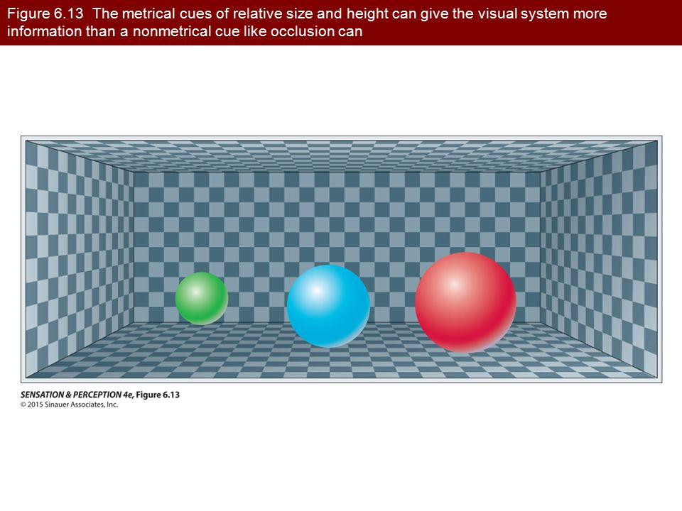 Figure 6.13 The metrical cues of relative size and height can give the visual system more information than a nonmetrical cue like occlusion can