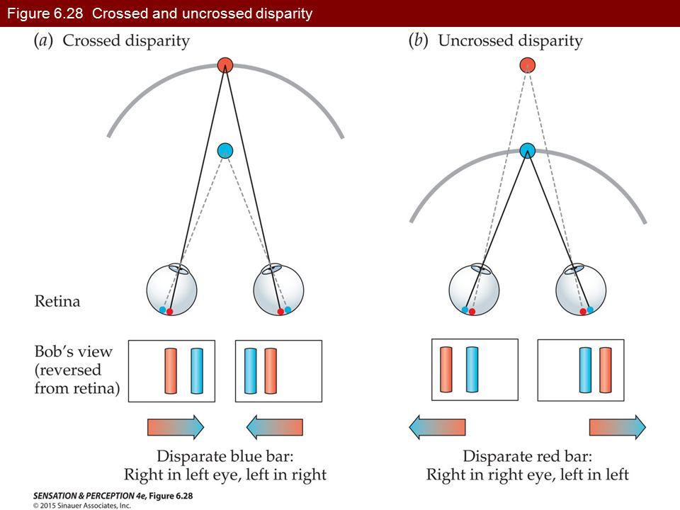 Figure 6.28 Crossed and uncrossed disparity