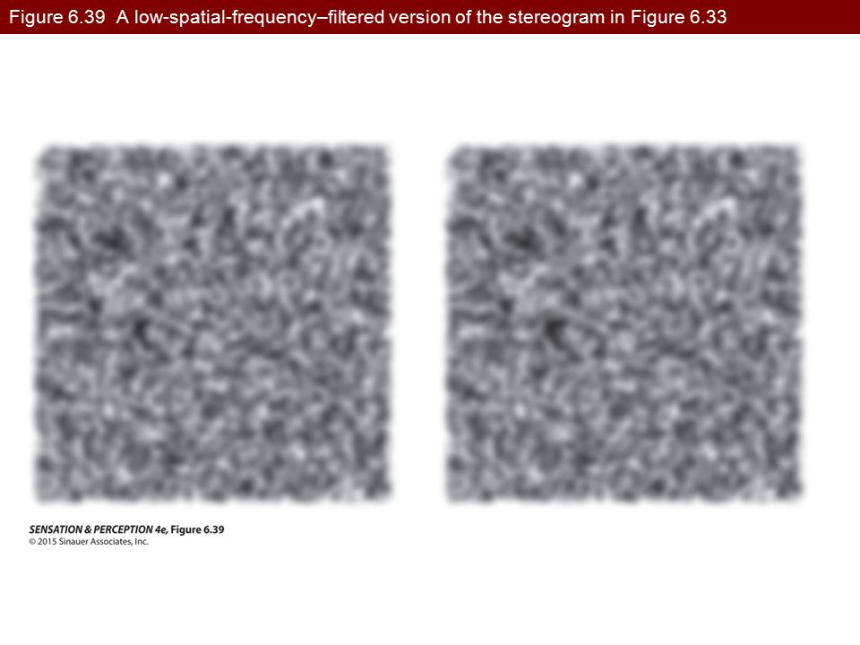 Figure 6.39 A low-spatial-frequency–filtered version of the stereogram in Figure 6.33