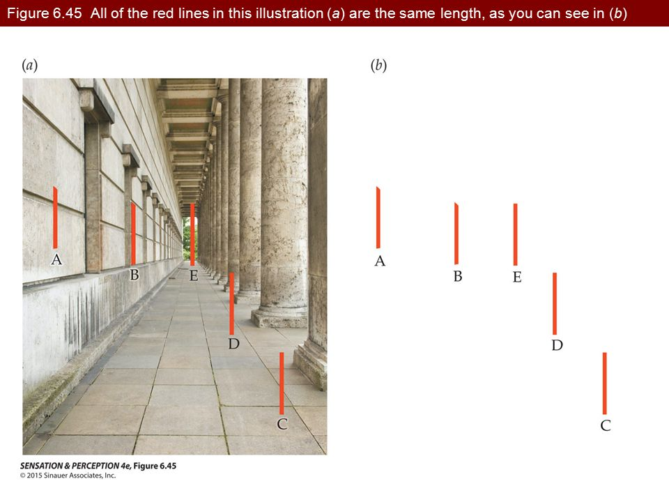 Figure 6.45 All of the red lines in this illustration (a) are the same length, as you can see in (b)