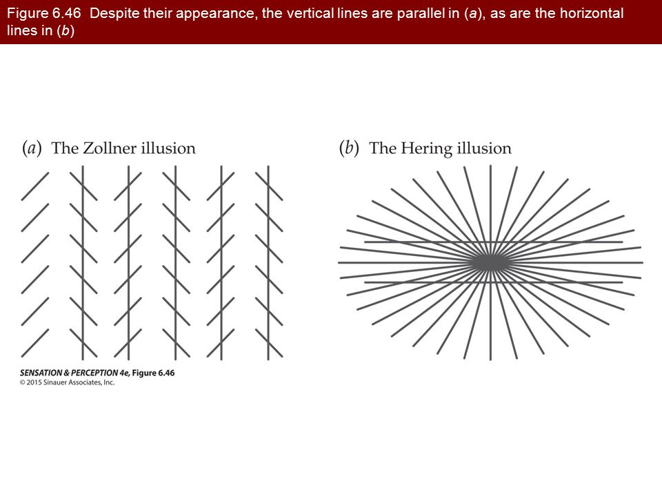 Figure 6.46 Despite their appearance, the vertical lines are parallel in (a), as are the horizontal lines in (b)