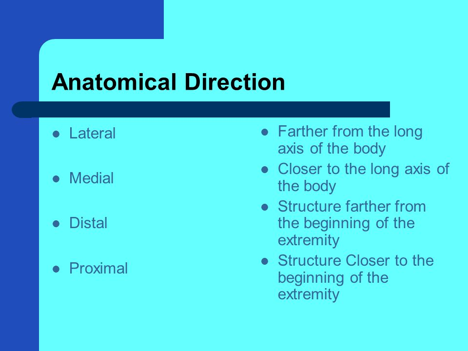 Anatomical Direction Lateral Medial Distal Proximal