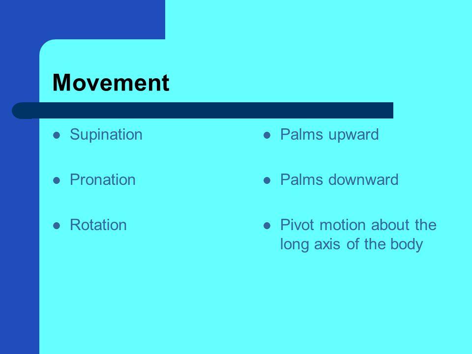 Movement Supination Pronation Rotation Palms upward Palms downward