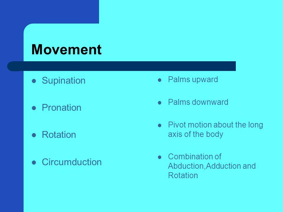 Movement Supination Pronation Rotation Circumduction Palms upward