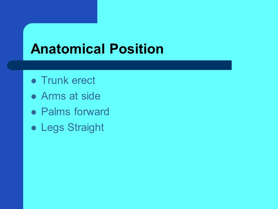 Anatomical Position Trunk erect Arms at side Palms forward