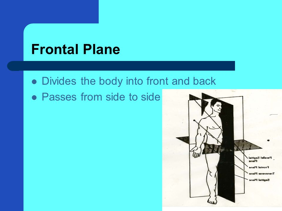 Frontal Plane Divides the body into front and back