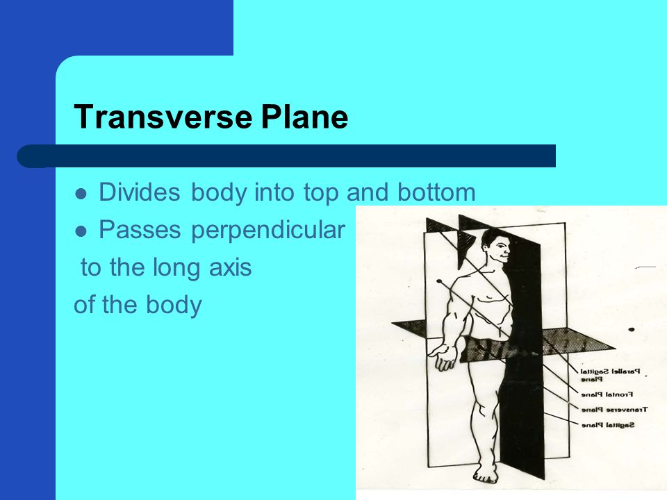 Transverse Plane Divides body into top and bottom Passes perpendicular