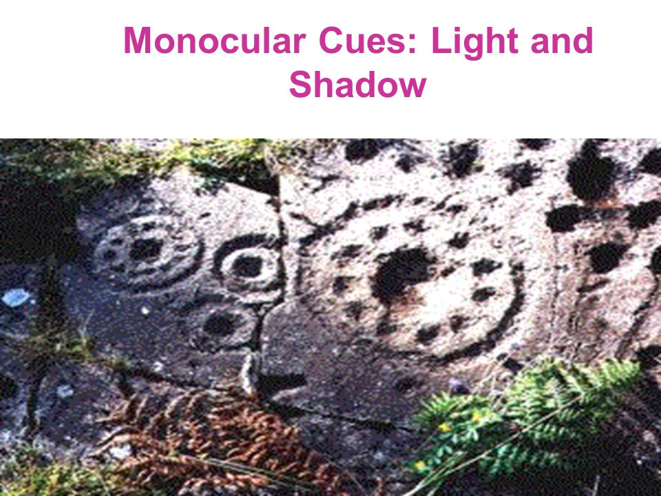 Monocular Cues: Light and Shadow