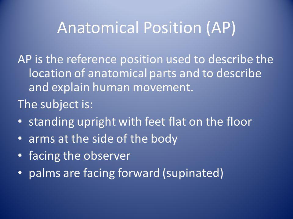 Anatomical Position (AP)