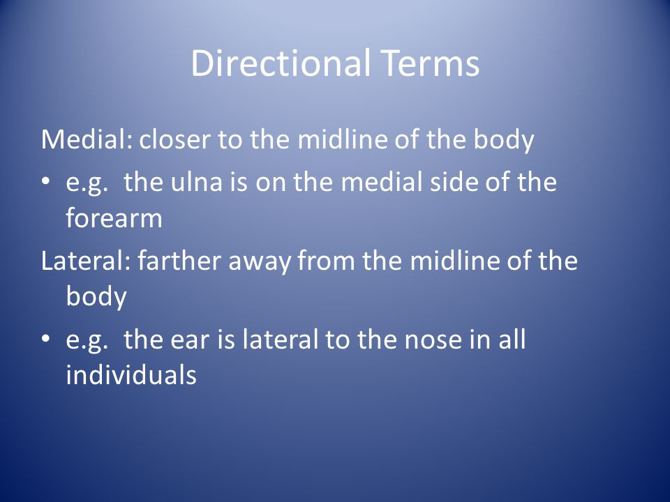 Directional Terms Medial: closer to the midline of the body