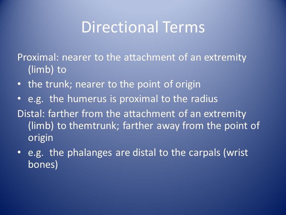 Directional Terms Proximal: nearer to the attachment of an extremity (limb) to. the trunk; nearer to the point of origin.