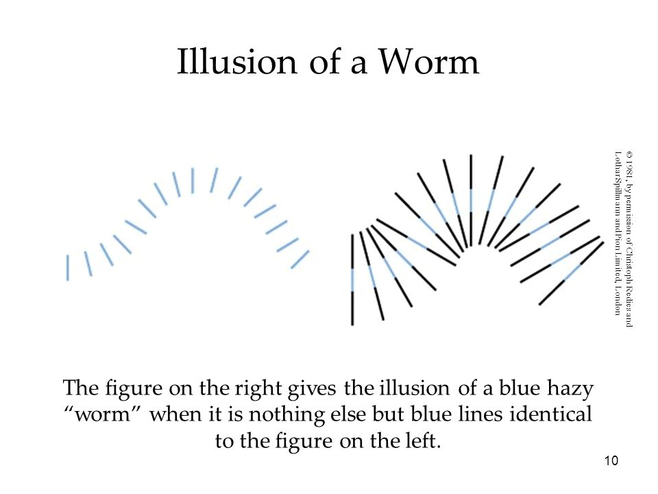 Illusion of a Worm © 1981, by permission of Christoph Redies and. Lothar Spillmann and Pion Limited, London.