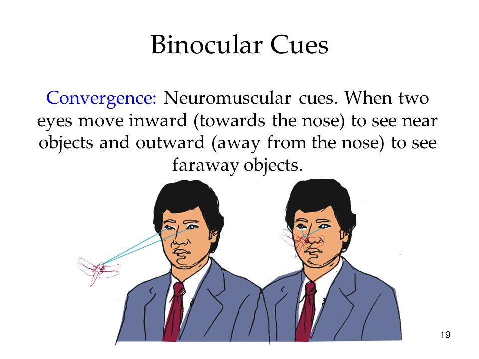 Binocular Cues