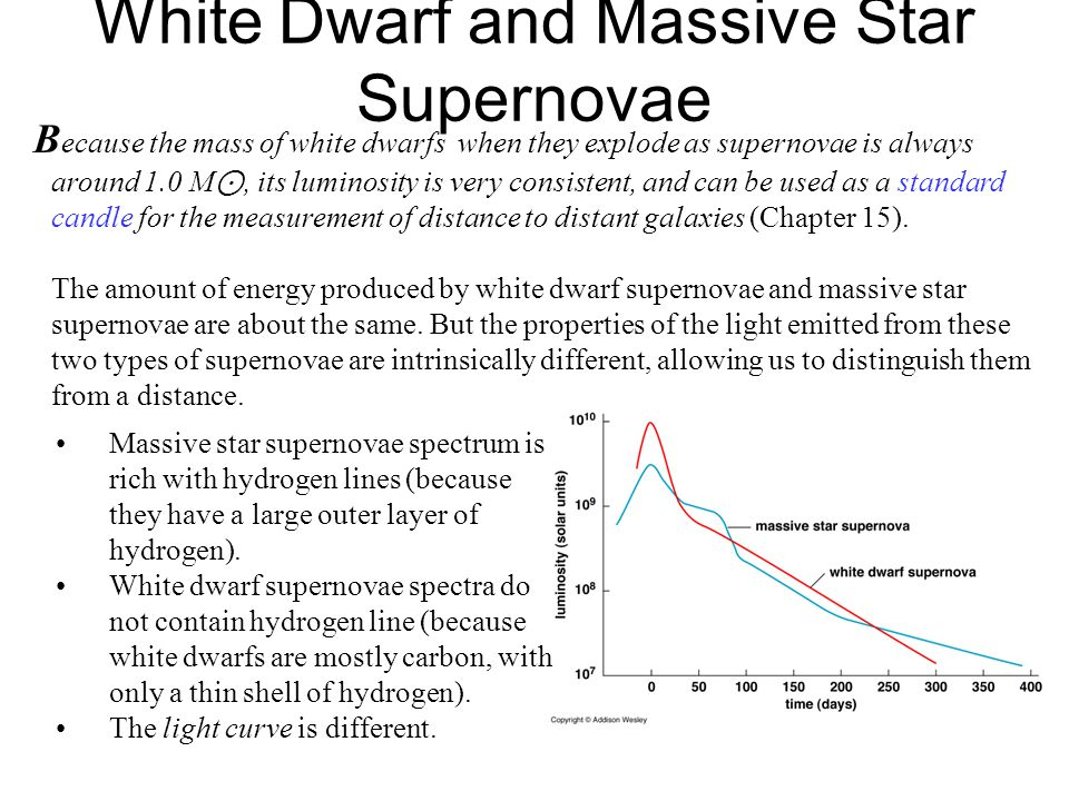 White Dwarf and Massive Star Supernovae