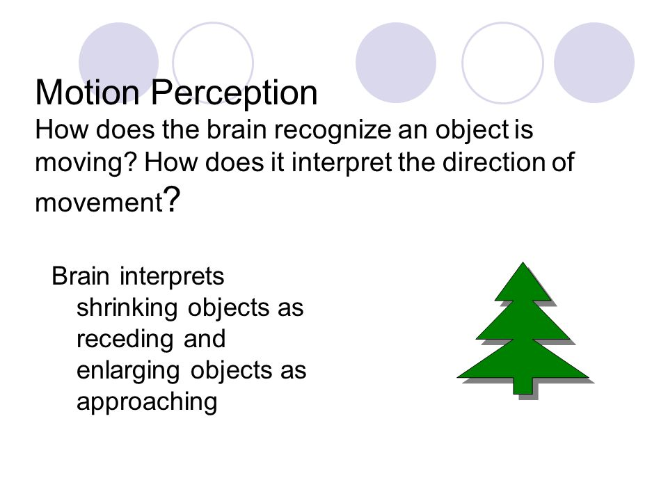 Motion Perception How does the brain recognize an object is moving