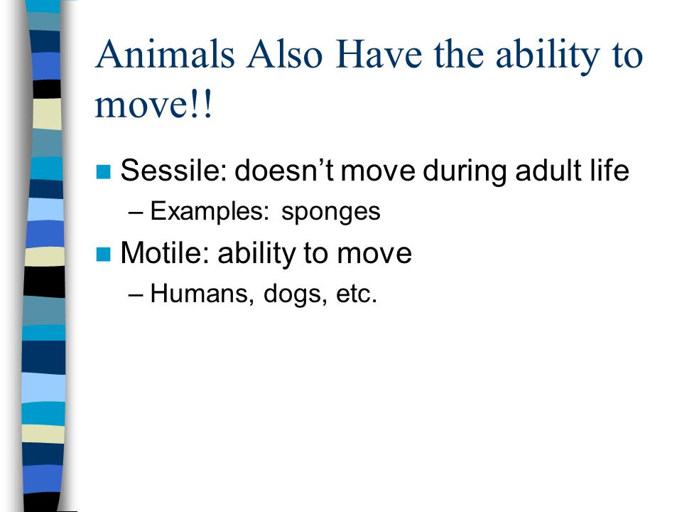 Animals Also Have the ability to move!!