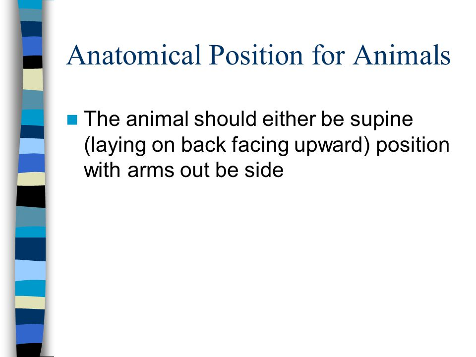 Anatomical Position for Animals