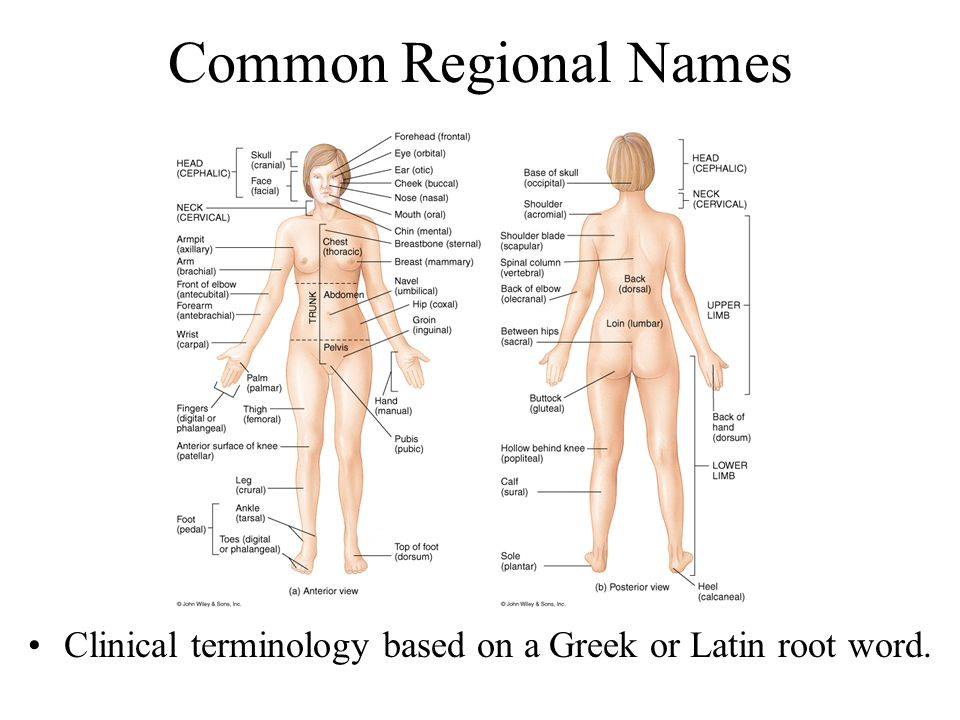 Clinical terminology based on a Greek or Latin root word.