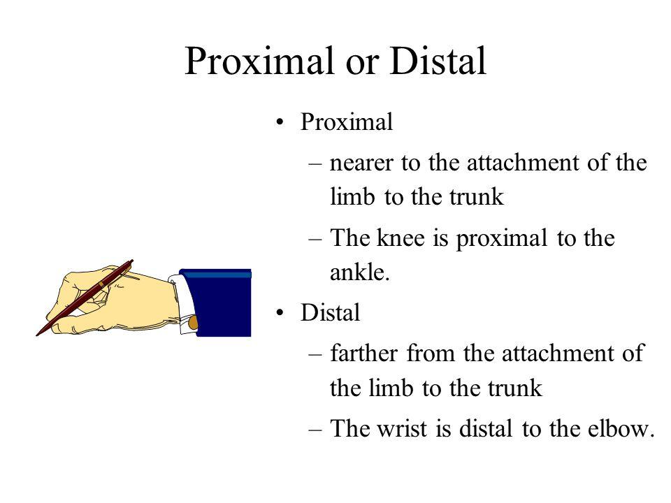 Proximal or Distal Proximal