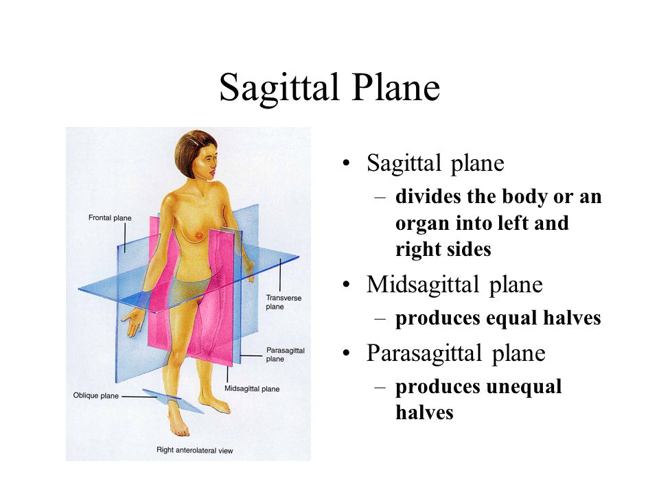 Anatomical position definition of Medical Dictionary - satukis.info