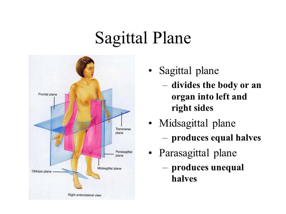 Sagittal Plane Sagittal plane Midsagittal plane Parasagittal plane