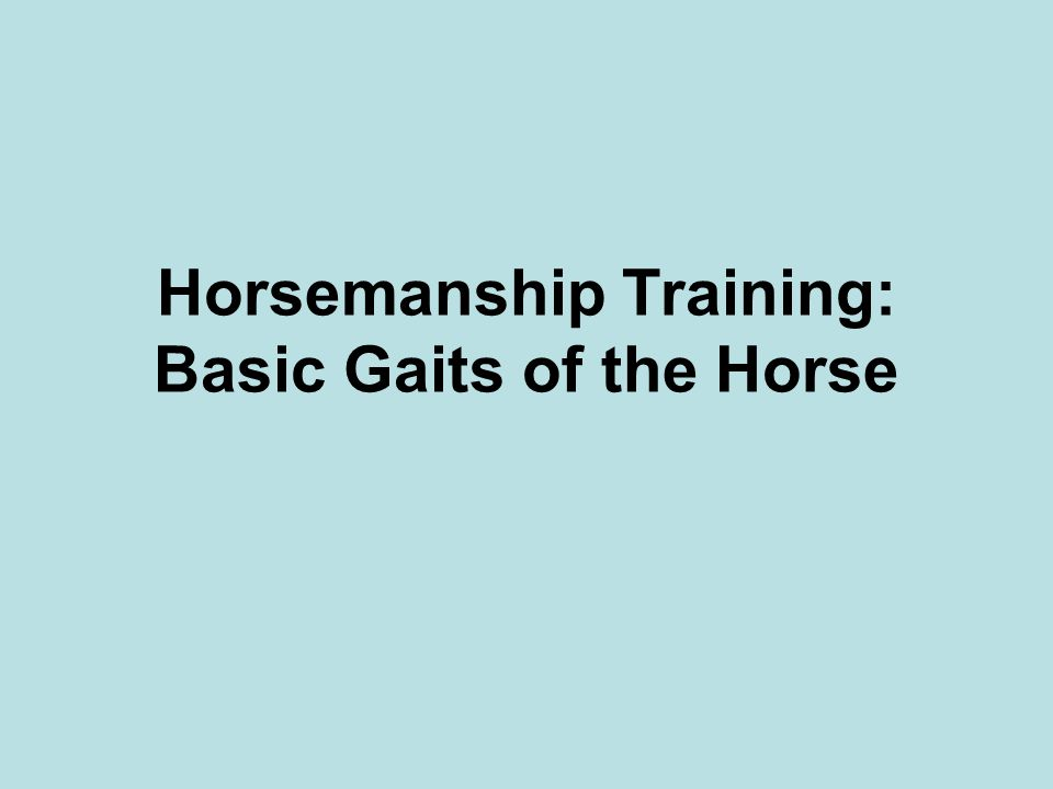 Horsemanship Training: Basic Gaits of the Horse