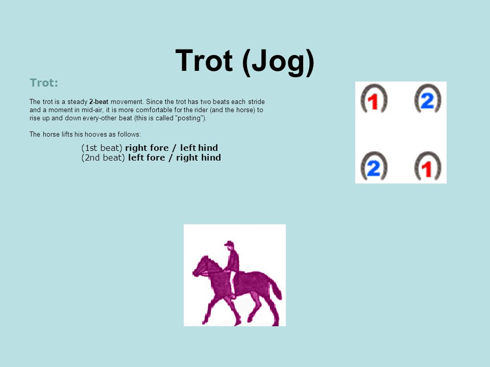 Trot (Jog)