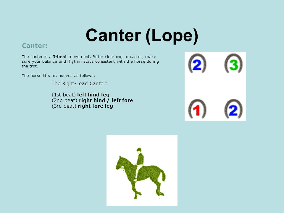 Canter (Lope)