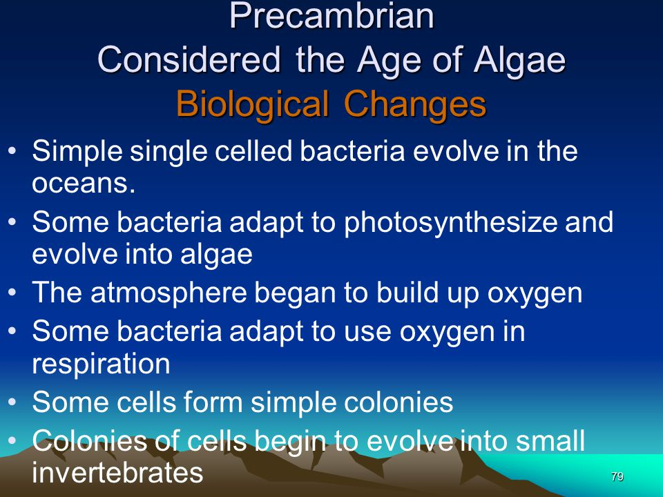 Precambrian Considered the Age of Algae Biological Changes