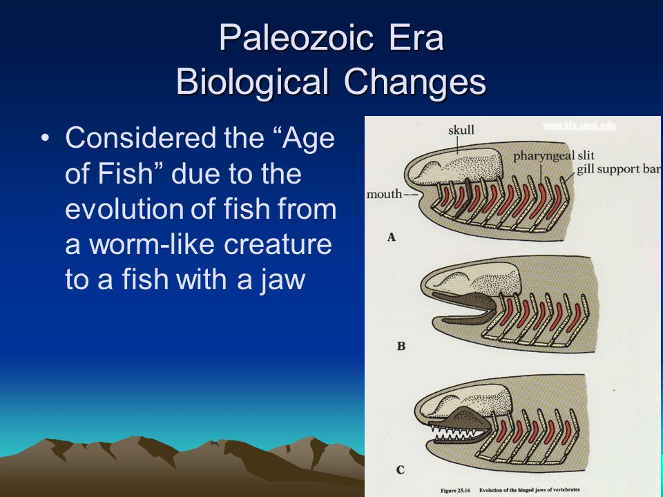 Paleozoic Era Biological Changes