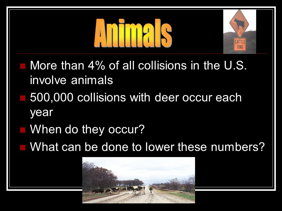 Animals More than 4% of all collisions in the U.S. involve animals