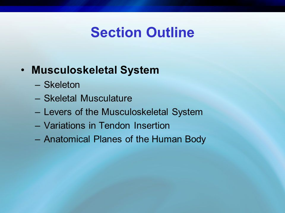 Section Outline Musculoskeletal System Skeleton Skeletal Musculature