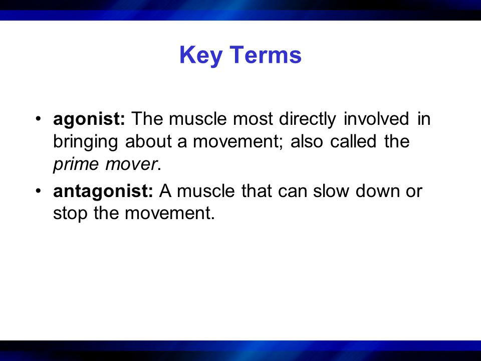Key Terms agonist: The muscle most directly involved in bringing about a movement; also called the prime mover.