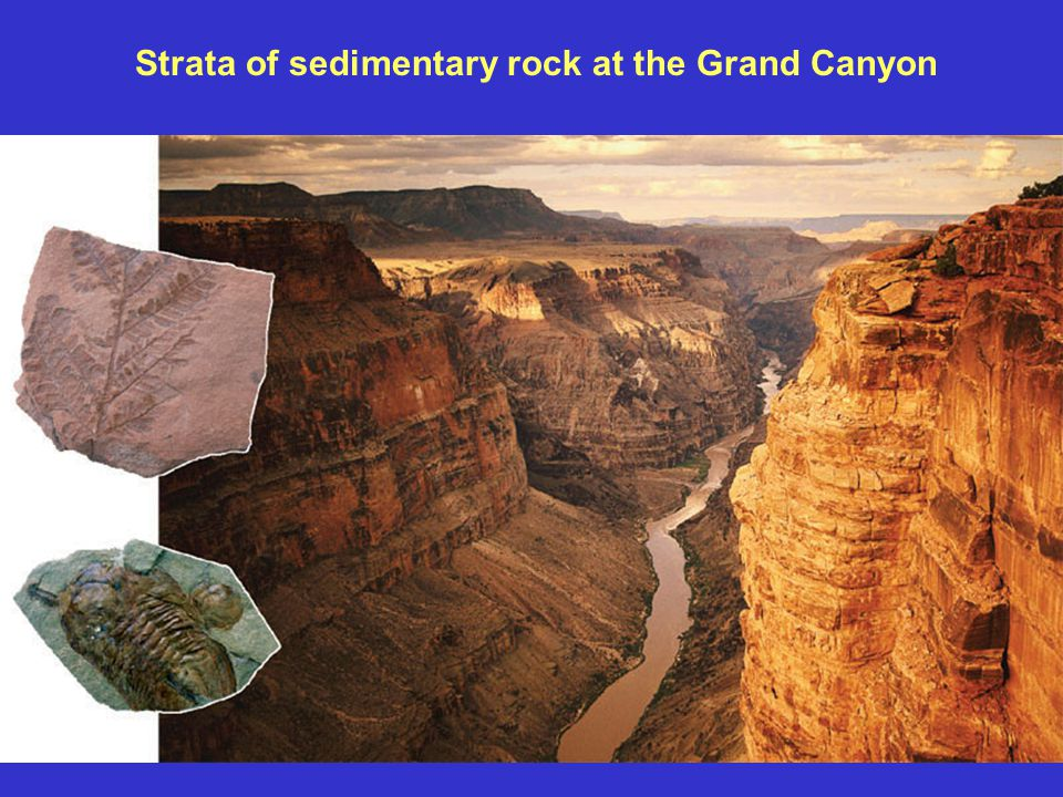 Strata of sedimentary rock at the Grand Canyon