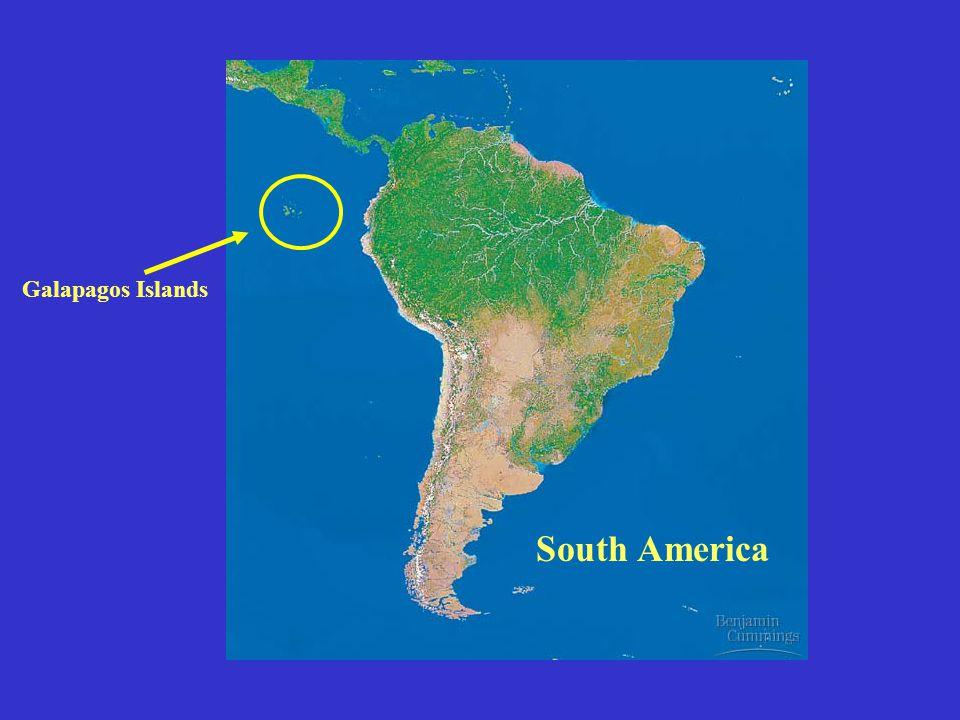 Galapagos Islands South America