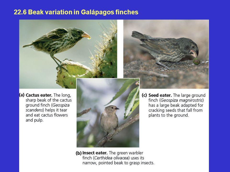 22.6 Beak variation in Galápagos finches