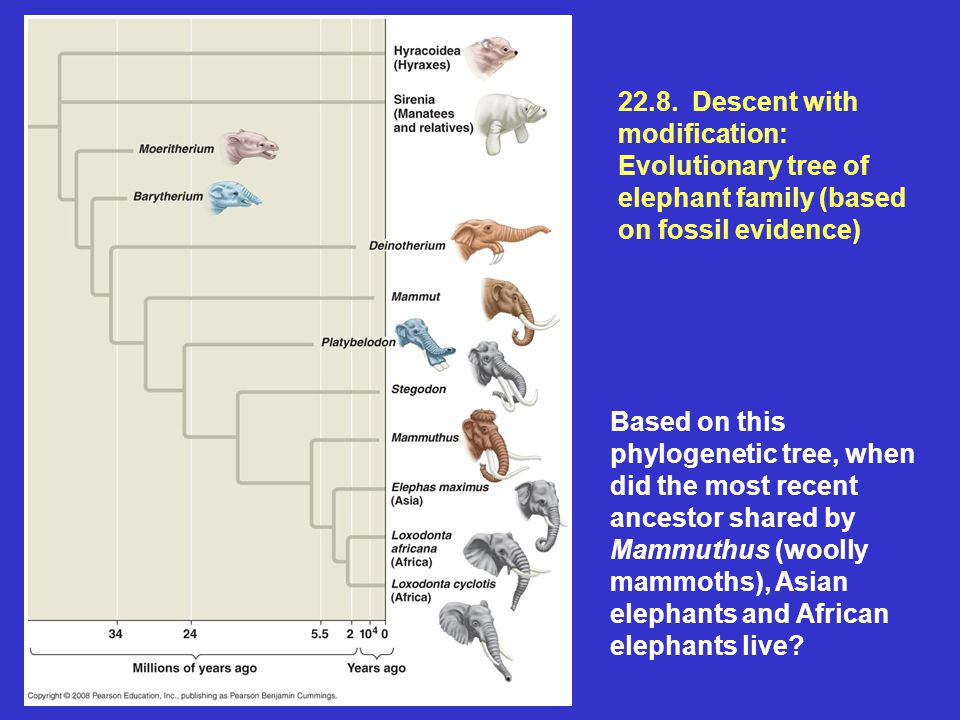 22.8. Descent with modification: Evolutionary tree of elephant family (based on fossil evidence)