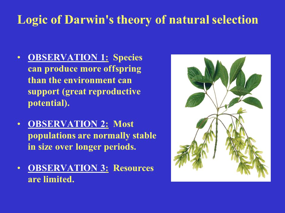 theory of natural selection In 1859, a biologist named charles darwin postulated a scientific theory, which stated that all living organisms evolved through a process of natural selection.