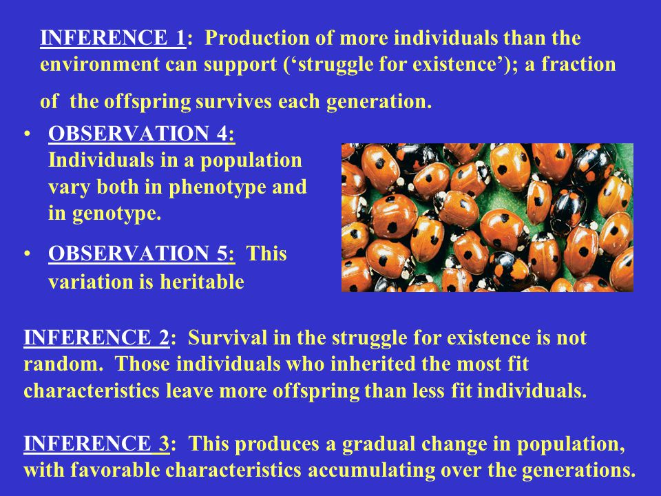 INFERENCE 1: Production of more individuals than the environment can support ('struggle for existence'); a fraction of the offspring survives each generation.