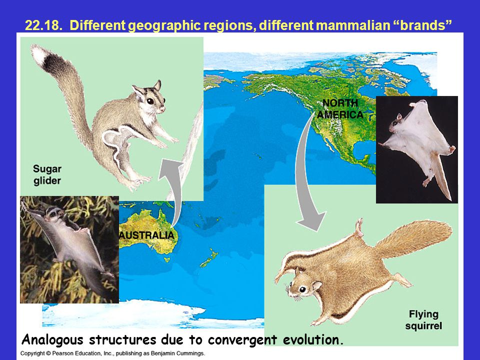 22.18. Different geographic regions, different mammalian brands