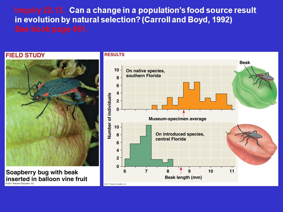 Inquiry 22.13. Can a change in a population's food source result in evolution by natural selection (Carroll and Boyd, 1992)