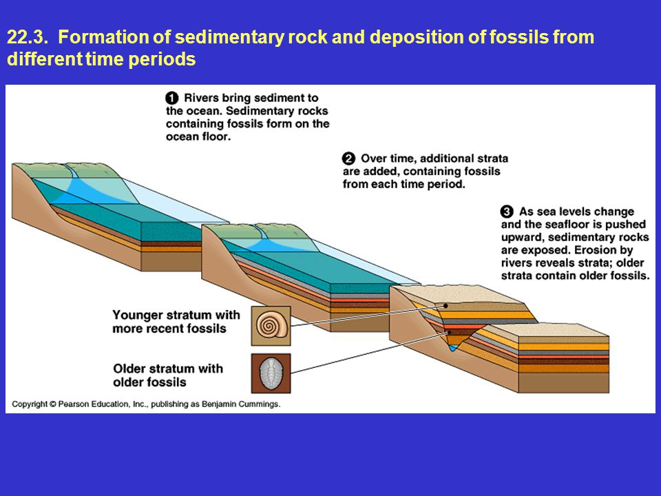 22.3. Formation of sedimentary rock and deposition of fossils from different time periods