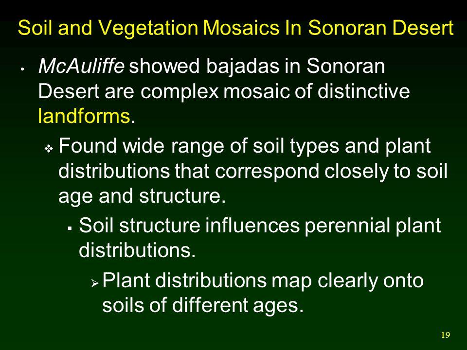 Soil and Vegetation Mosaics In Sonoran Desert