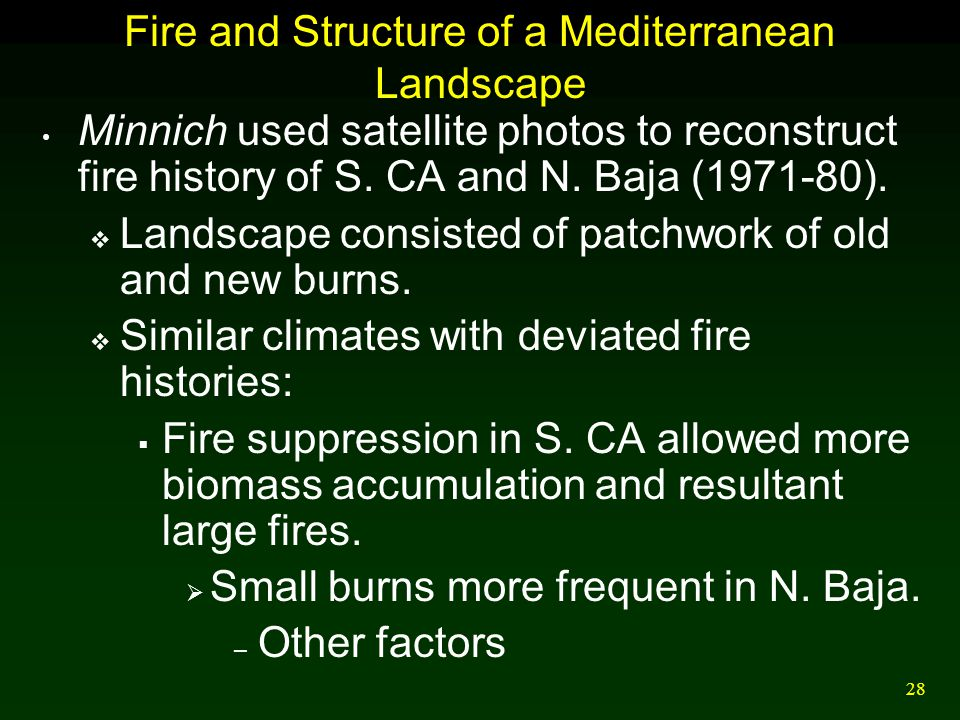 Fire and Structure of a Mediterranean Landscape